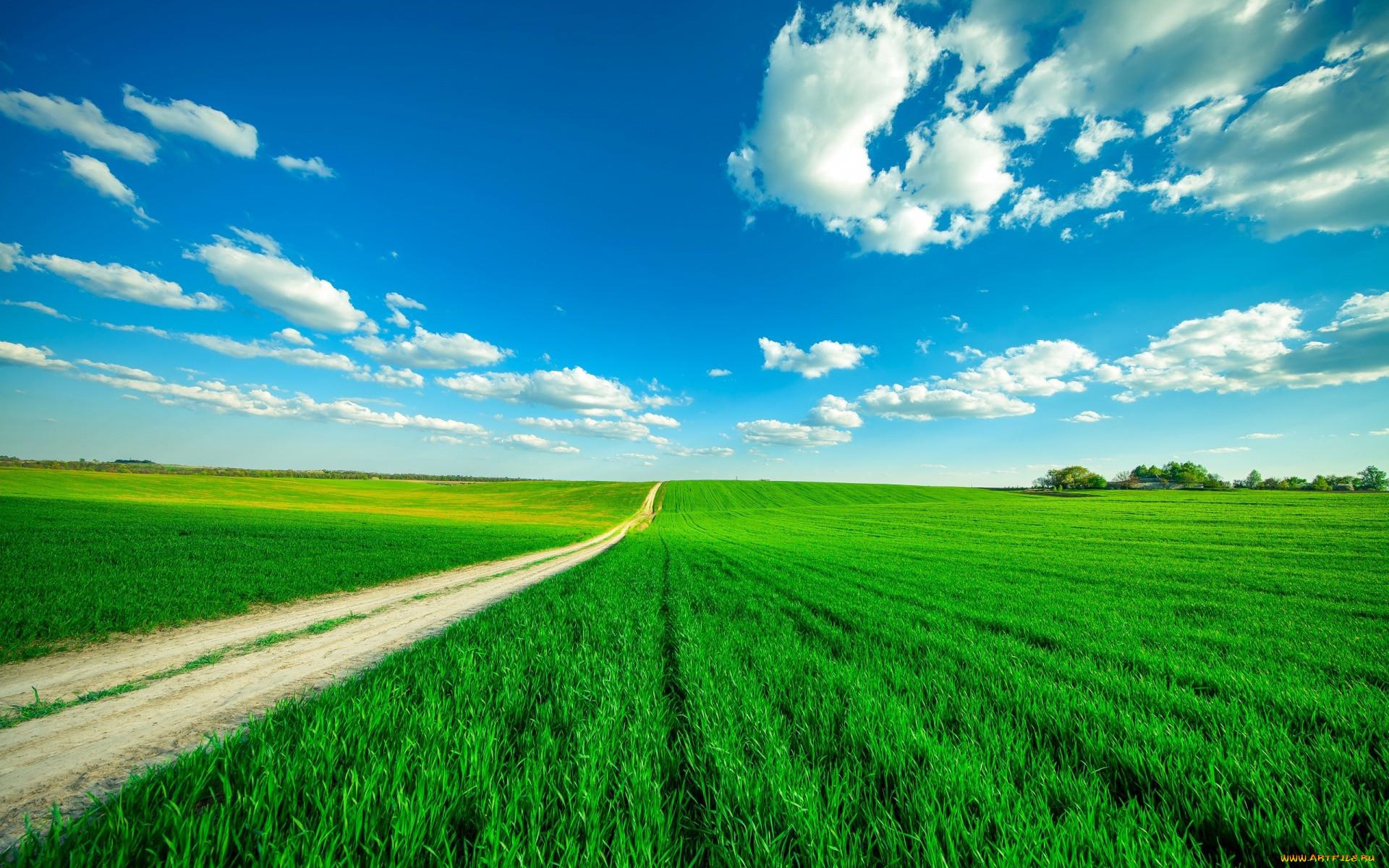 Картинка природы поле